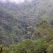 forest views, Valle Nacionale, Oaxaca, Mexico, 2004_12_17 034.jpg por maholyoak