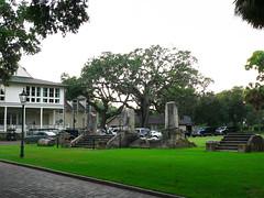 Large Tree Outside Inn