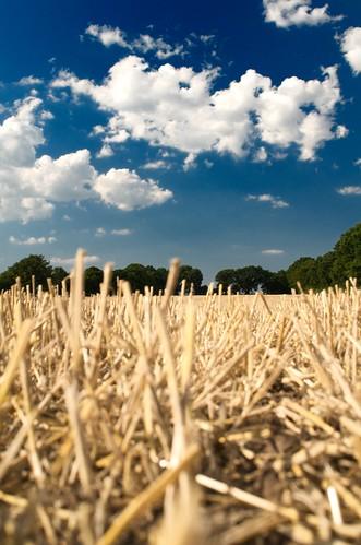 Day 211 / 365: Getreide weg