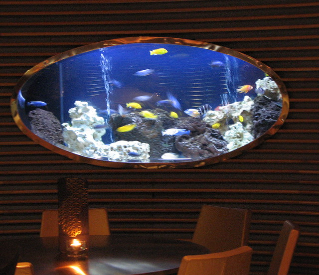 Fish tank in the bar flickr photo sharing for Fish tank bar