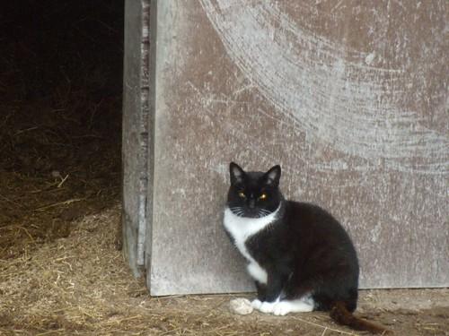 Cat, near Kingston