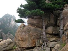 南韓雪嶽山國立公園Gwon Geunseong山山頂(照片由Manuele Zunelli拍攝)