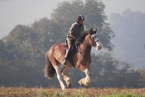 I Avoid Canter If I Can Because My Horse Ignores My Aids To Stop!