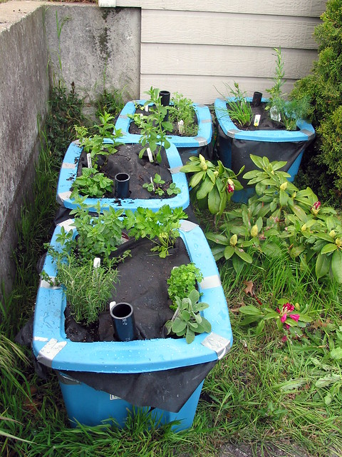 Herb container garden flickr photo sharing for Patio herb garden designs containers
