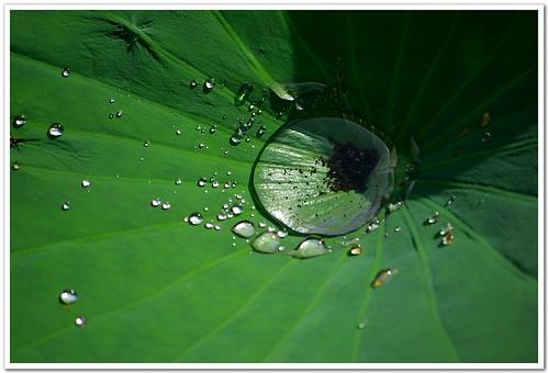 最愛pentax 綠