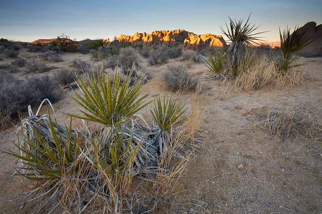 Desert Plant Life and Rocks | Flickr - Photo Sharing!
