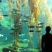 birch aquarium. la jolla 07. by lindsey kraay