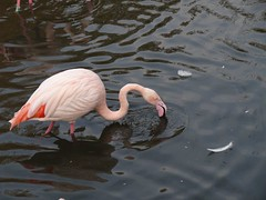 swan(0.0), animal(1.0), wing(1.0), fauna(1.0), reflection(1.0), beak(1.0), flamingo(1.0), bird(1.0), wildlife(1.0),