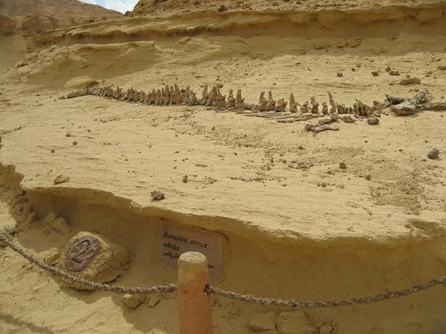 Las maravillas del desierto del Sahara 3058817685_782773ca34_z