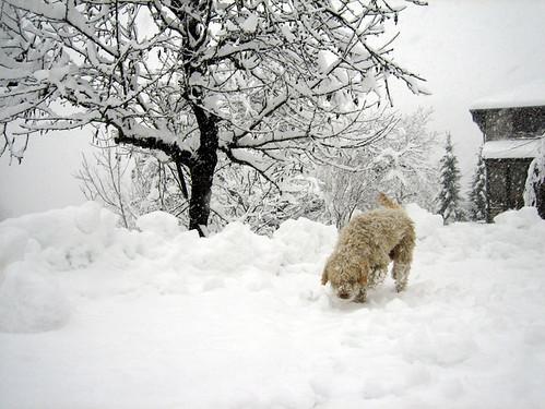 Jack Bauer always hunting truffles!:-)