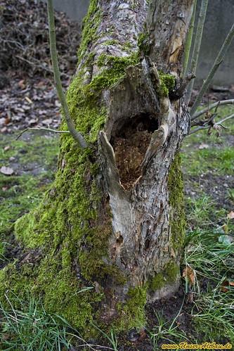 pflanzen hilfe unser apfelbaum hat ein loch hornbach stammtisch. Black Bedroom Furniture Sets. Home Design Ideas