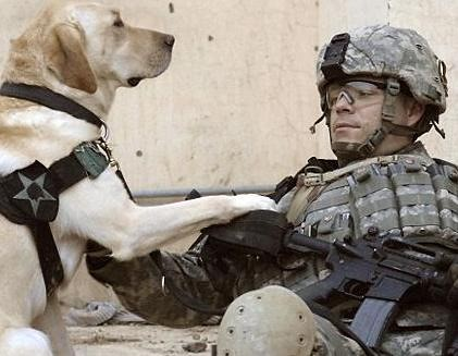 dog_military