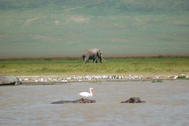 Vista de una las lagunas del cráter del Ngorongoro, Tanzania.