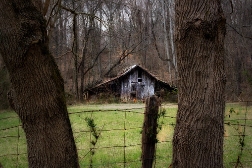 Barn between two trees