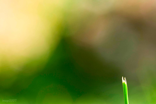 macro green grass canon garden photography virginia bokeh lawn v lawnmower rebelxt bladeofgrass virgie 100mmmacro the99 pinoykodakero imago2007 pkchallenge