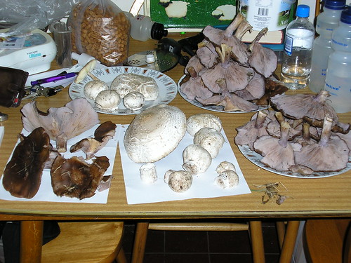 Our harvest of wild mushrooms