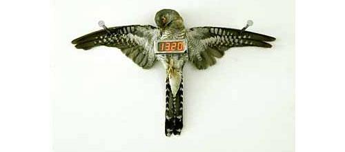 Experimente design julho 2008 - Albero modern cuckoo clock ...