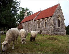 Sotherton Sheep