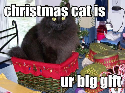 Christmas LOLCAT