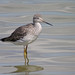 Greater Yellowlegs - Photo (c) Len Blumin, some rights reserved (CC BY-NC-ND)