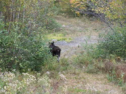 autumn nature animals woods wildlife maine newengland foliage