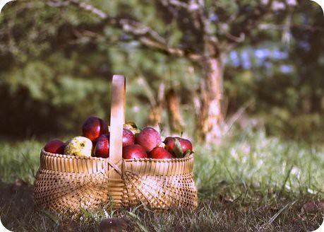 Sunday apples