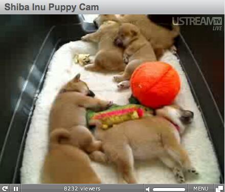 channel pon puppy cam