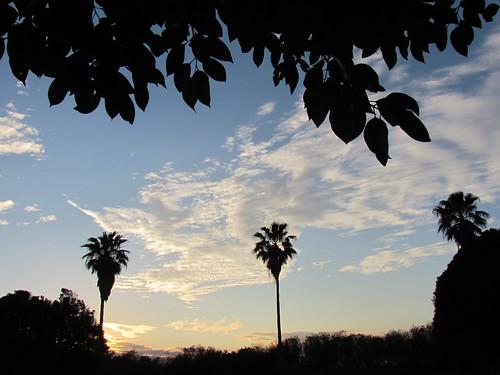 blue trees clouds palmtrees serenity blueskies heavens