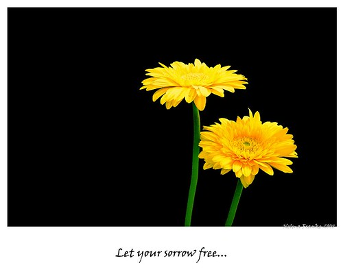 Let your sorrow free