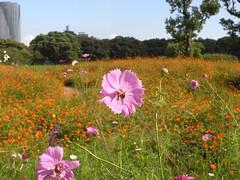 grass(0.0), garden cosmos(0.0), annual plant(1.0), prairie(1.0), flower(1.0), field(1.0), garden(1.0), plant(1.0), flora(1.0), natural environment(1.0), meadow(1.0), cosmos(1.0), grassland(1.0),