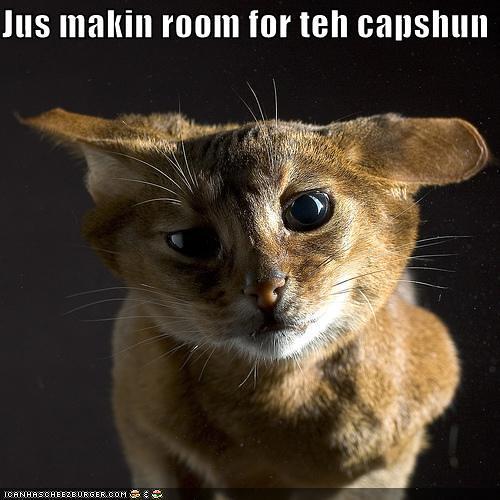Image Result For Zoom Room Dog