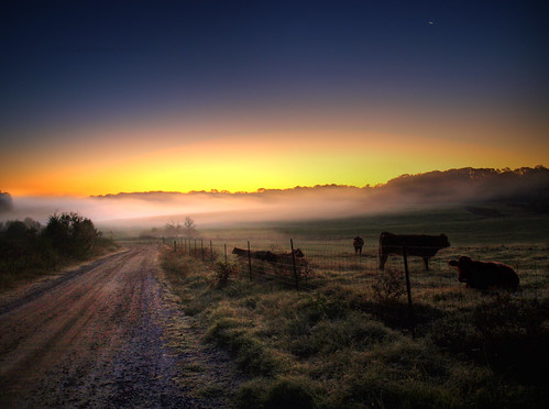 road county moon beautiful field fog rural sunrise ga fence georgia wire cows olympus athens dirt pasture barbed hdr clarke e510 pca44