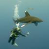 oceanicandphotographer