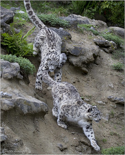Mohan following his mother