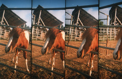 animal, mare, colt, pack animal, horse, stable, mustang horse,
