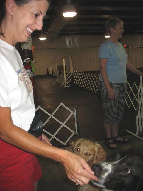 Image Result For Tulsa Dog Training