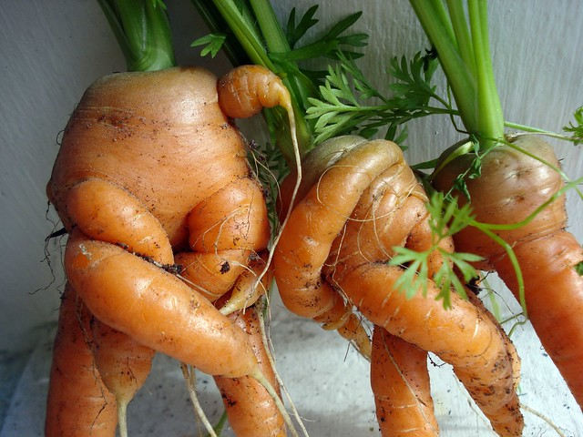 closer carrot can-can
