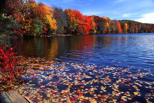 new york fall leaves reflections newengland foliage westchester naturesfinest abigfave platinumphoto colorphotoaward theunforgettablepictures colourartaward artlegacy goldstaraward damniwishidtakenthat