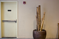 Bamboo and exit