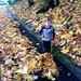 sequoia walking through the fallen leaves on our street   DSC02094