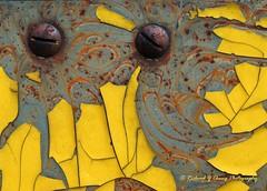 Petals of Rust