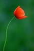 Flowers by Kenzo by nexus6