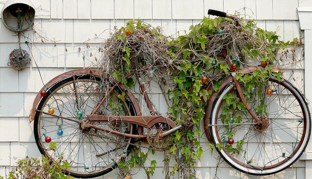Rusting Bicycle Trellis