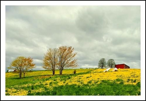 field yellow clouds novascotia farm valley colourful annapolis picnik d80 nikkor1755dx colourlicious
