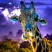 my first giraffe by Kris Kros