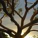 Sunny tree by yno