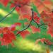 Fall Leaves by Carl M