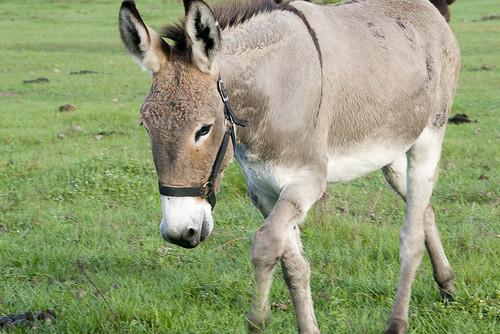 florida donkey jacksonville eos30d