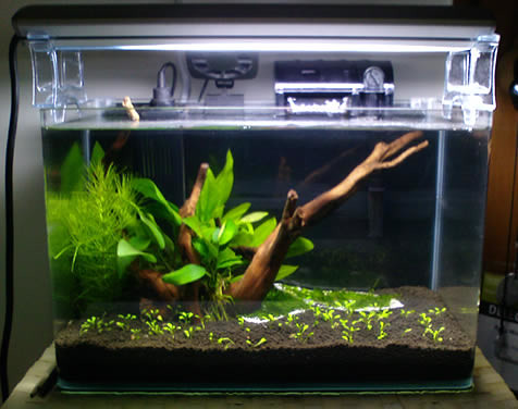 Advice on 1 foot planted tank about fish and cycling for Cycling a fish tank