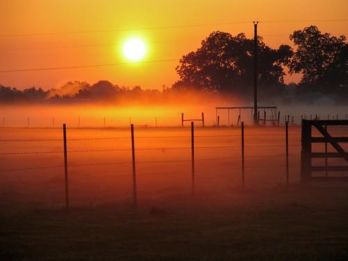 morning red fog fence dawn